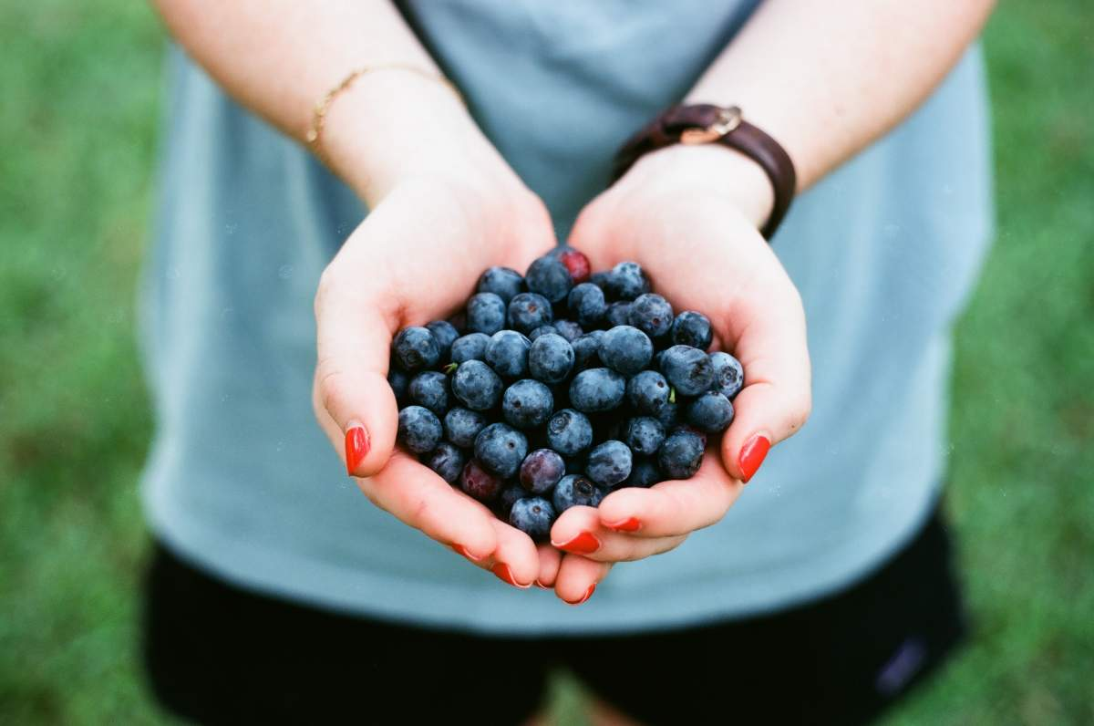 blue-berry-health-facts-blog